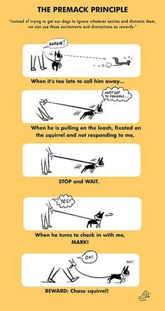 The premack principle by Lili Chin on Flickr #dog #training #boston_terrier…