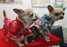 Pet Dog Show In Changchun