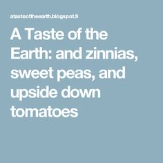 A Taste of the Earth: and zinnias, sweet peas, and upside down tomatoes