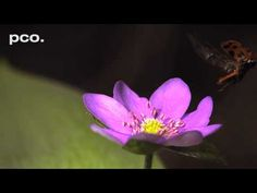 Ladybugs take off - in slow motion (XXL)