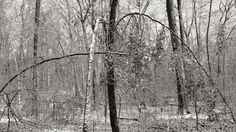 """James Luckett - Forest. """"Time is at once one and everywhere concurrent, coincident, and simultaneous."""""""