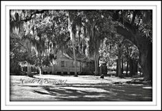 ~ ~ ACADIAN CABIN in Black and White ~ ~ Destrehan, Louisiana ~  A new addition to my BLACK and WHITE and SEPIA SERIES. To give the original ACADIAN CABIN a different look ... I cropped the image a little closer and converted it to black and white. What says Southern more than an Acadian style cabin set among giant live oak trees dripping in Spanish moss? This was taken soon after a late afternoon shower. The grasses are still damp with the moisture from the rain. These huge live oak trees…
