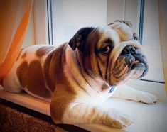 Looking for elegant dog names? Here is a collection of sophisticated male/female dog names. Dog Breed Names, Female Dog Names, Best Dog Names, Types Of Dogs Breeds, Dog Breeds, Bulldog Names, English Bulldogs, Dog Life, Horse Breeds