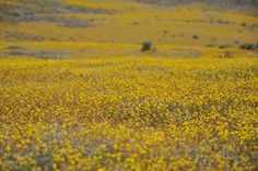 The Richtersveld, South Africa