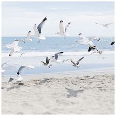 Imagem de beach, birds, and ocean