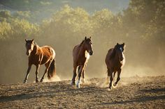 """Bands of mustangs are being """"zeroed out"""" from ranges, and wild horse advocates are running out of time to save them. slide show from TreeHugger"""
