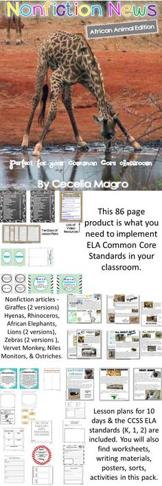 This 86 page product is what you need to implement ELA Common Core Standards in your classroom. It includes nonfiction articles for close reading on African Animals - Giraffes, Hyenas, Rhinoceros, African Elephants, Lions, Zebras, Vervet Monkey, Niles Monitors, and Ostriches. Lesson plans for ten days and the CCSS ELA standards (K, 1, 2) are included. You will also find all of the worksheets, writing materials, posters, sorts, activities in this pack.