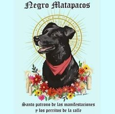 """kropotkindersurprise: """" kropotkindersurprise: """"August 26 2017 - Some sad news, Negro Matapacos (Black Copkiller), Revolutionary Chilean riot dog, friend to worker and student alike, has sadly passed. Street Dogs, Dog Logo, Patron Saints, Post Punk, Man Humor, Fantasy Creatures, How To Fall Asleep, Chile, Dog Lovers"""