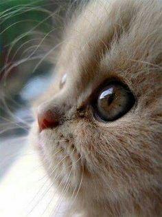 Kattensnoetje.