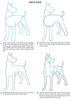 How to draw a Great Dane
