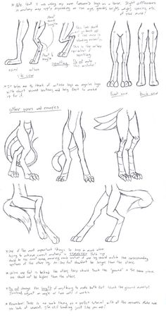 Anthro Leg Tutorial by VibrantEchoes on deviantART