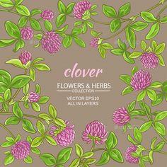 Где купить цветы клевера ползучего, магазин цветы в минске юск