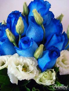 Kedvencem  a  Kék  Rózsa. fényképe.