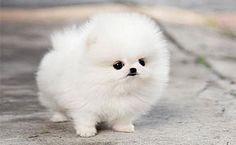 Lil n fluffy!!