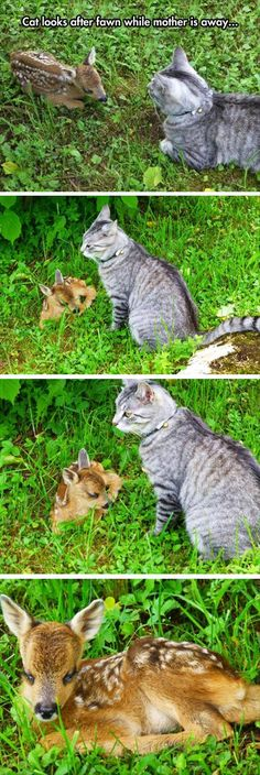 Katze und ein kleines Reh