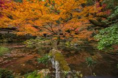 https://flic.kr/p/xKMjrX | Nanzen-in, Emperor Kameyama's Exquisite Garden! | Kyoto, during the autumn season, is a photographers paradise. This is the Sogen-ike Pond (曹源池) at Nanzen-in (南禅院), a sub-temple of Nanzen-ji (南禅寺) seen from another angle!