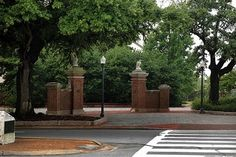 The Toomer's Oaks
