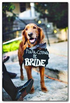 dog wedding decor Dog Wedding Attire, Wedding Dogs, Dog Tuxedo, Dog Wallpaper, Pitbull Wallpaper, Dogs Golden Retriever, Golden Retrievers, Golden Retriever Wedding, Cartoon Dog