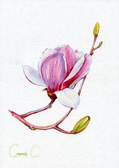 Magnolia Flowers Watercolor Original Painting. Original watercolor painting from the artist, Svetlana Smirnova on ETSY: https://www.etsy.com/shop/NatalieStorePainting *Also available on EBAY: https://www.ebay.com/usr/jet_ua?_trksid=p2047675.l2559