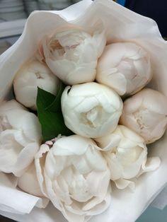 White peonies- LIHMIL INC next day shipping-pickup! No mínimums- Build.box White Peonies – LIHMIL INC Next Day Pickup! Purple Peonies, Peonies Bouquet, White Peonies, Bouquets, Blush Peonies, Black Peony, Fresh Flowers, White Flowers, Beautiful Flowers