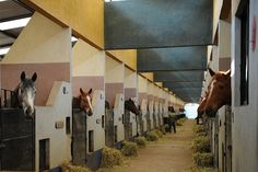 U.S.D.A. May Approve Horse Slaughter Plant - Just plain gross!