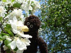 Erwin und die Apfelblüten.