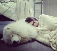 When your best friend is the most comfortable pillow #samoyed #cuddle