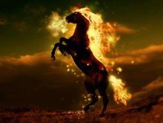Horse on fire by ravr.deviantart.com on @deviantART Horse Background, Fire Horse, Chariots Of Fire, Desktop Images, Hd Desktop, Cool Fire, Black Unicorn, Fire Art, New Backgrounds