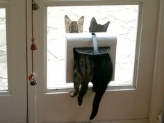 """Cats like doors left open in case they change their minds."" --Rosemary Nisbet"