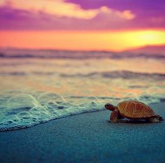turtle, beach, and sea image
