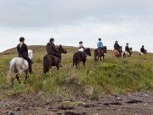 nice riding tours Tours, Horses, Iceland, Animals, Nice, Ice Land, Animales, Animaux, Animal