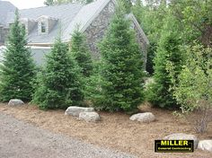 This home utilizes staggered plantings to provide privacy screening.  The boulders are a great touch-it only lacks smaller shrubs and perennials tucked in front to complete the look.