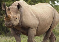 """Collapse of Large Herbivores May Lead to """"Empty Landscapes"""" Worldwide"""