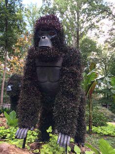 Gorilla topiary