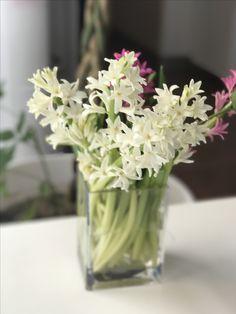 Hyacinthus Atelier Dual Romania #atelierdual