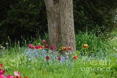 Tulips around the base of a tree