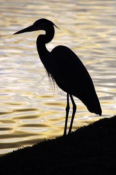 heron sillhouette | Heron Silhouette | Flickr - Photo Sharing!