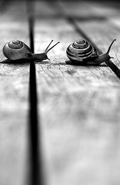 Snails, black and white photograpy.