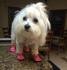 Summer Dog Boots - Mini Meshies by Barko Booties fca46cd5d8e8