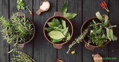 Warum in die Ferne schweifen und Superfoods aus China oder Peru kaufen? Einige der gesündesten Vitalstoffquellen wachsen auf deiner Fensterbank!