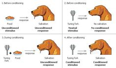 The Effects of Positive and Negative Reinforcement Classical Conditioning Behavioral Psychology, Psychology 101, Developmental Psychology, Dog Clicker Training, Dog Training, Psychology Experiments, Mastery Learning, Operant Conditioning, Direct Instruction