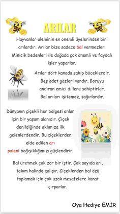 Learn Turkish, Canada