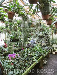 Flowers on Friday . Orchids, This Time Orchids Garden, Orchid Plants, Cactus Plants, Cool Plants, Air Plants, Indoor Plants, Indoor Gardening, Organic Gardening, Orchid Show