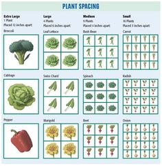 Square Foot Plant Spacing
