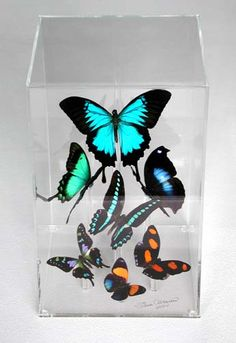 Butterfly Gallery Butterfly Art. You can choose any size or butterfly combination you wish. A little pricey, but these are so beautiful in person.