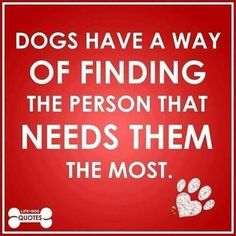 This makes me think of my beloved Sir Arthur Bleu whom I rescued at the ripe old age of 13.  I only had him 5 months but he brought so much joy and love that will never be forgotten.  He DEFINITELY adopted me.  I miss you Bleuby.....