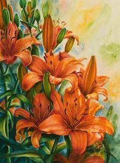 Orange Asiatic Lilies...