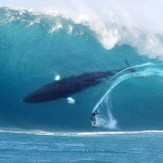 Whale of a surf