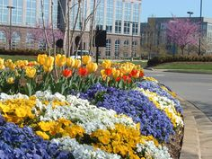 Pansies and Tulips by Color Burst Landscapes