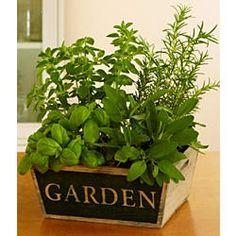 Gourmet Herb Garden  $39.99